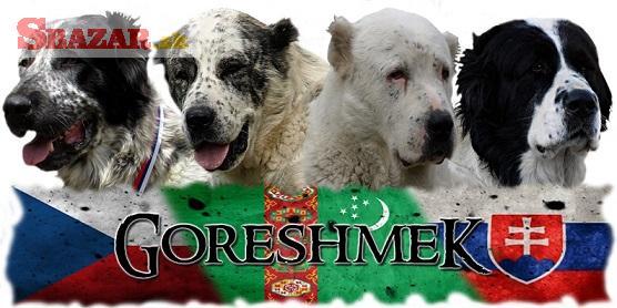 Stredoazijský ovčiak - SAO s PP
