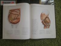 atlas topografickej anatómie hospodárskych zvier