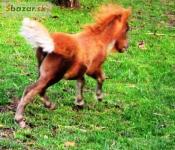 Miniaturní kůň