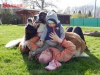 Prodej štěňátek moskevského strážního psa 242786
