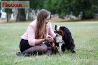 Bernský salašnícky pes 247935