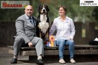 Veľký švajčiarsky salašnícky pes 247942