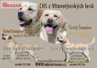 Labrador retriever štěňata 248051