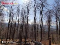Prodej 30 ha lesa v k.ú. Vydrná