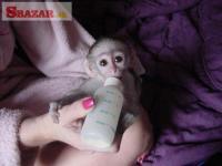 kapucínske opice