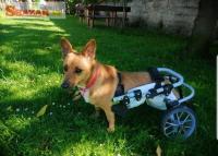 Invalidní vozík pro psa, nebo mačku.